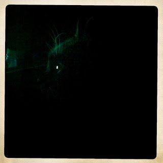 Nachts sind alle Katzen…