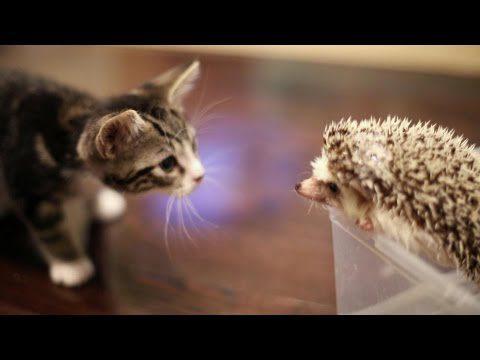 Kätzchen und Igel