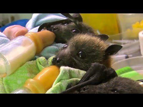 I am Batgirl!
