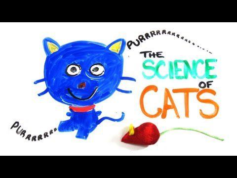Abteilung Forschung: die Katze, das wunderliche Wesen