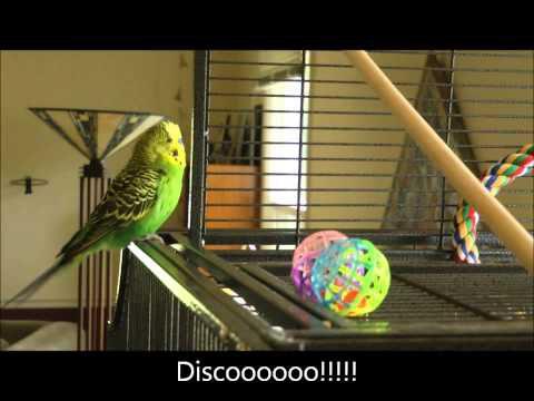 Discozeit!