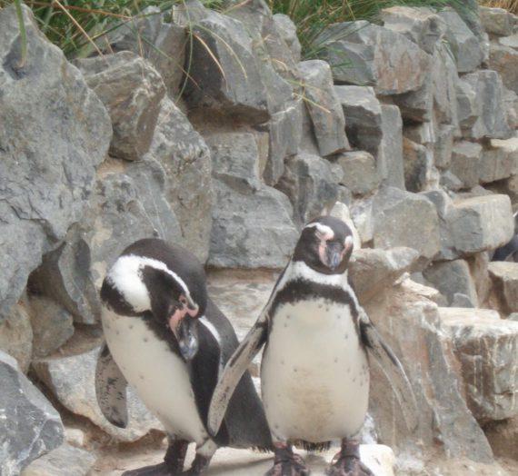 Können Pinguine seilspringen?