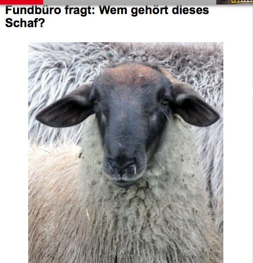 Ein (neuer) Schafsthriller