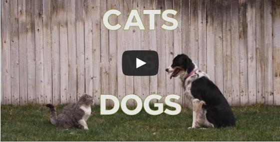 Katze? Hund? Welches Haustier ist das Beste?