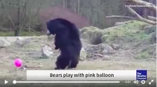 Bären und ein pinker Ballon