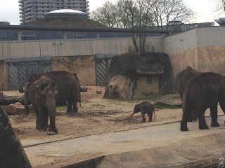 Im Kölner Zoo: Willkommen, lieber La Min Kyaw!