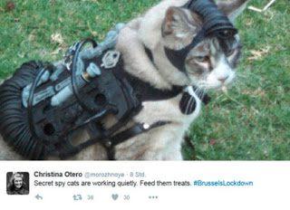Katze nimmt Geiseln – Notrufe von besorgten Bürgern