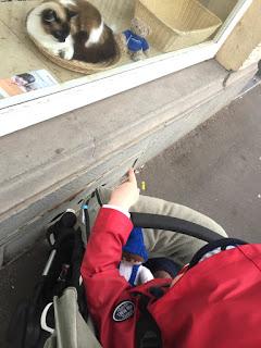 Im Schaufenster erblickt das Kind eine Katze