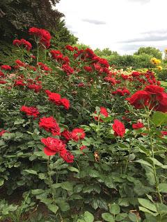 Rosengarten Fort X Köln: Rote Rosen / Blüten