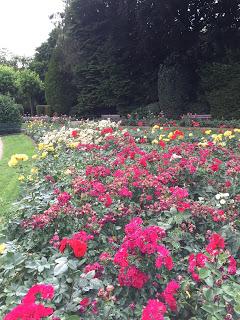 Rosengarten Fort X Köln: Buntes Blumenmeer, bunte Rosen