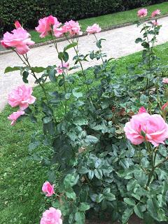 Rosengarten Fort X Köln: Rosa Blüten 2 und Blick auf den Weg