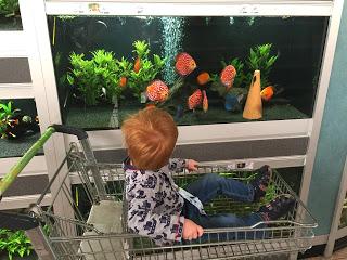 Das Kind sitzt im Einkaufswagen und möchte Fische gucken und kaufen