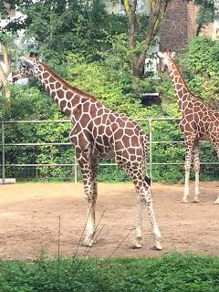 12 von 12 im September: Zoo- Giraffen