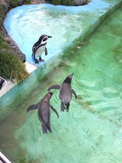 12 von 12 im September: Ich liebe Pinguine