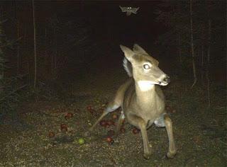 Reh und Flughörnchen bei Nacht