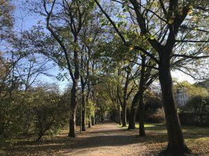 Park Sonnenschein Herbst